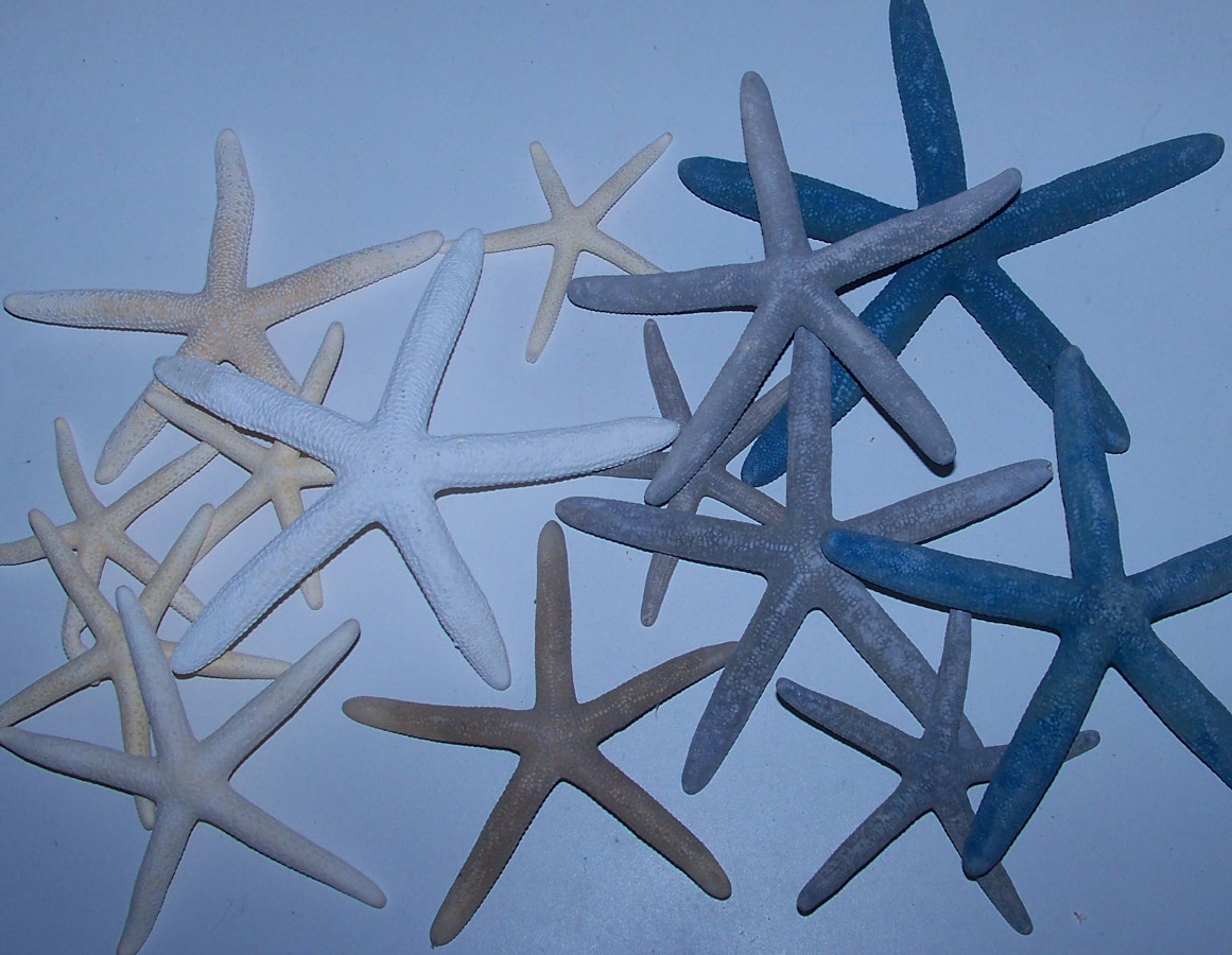 Pencil Starfish, White or Blue Finger