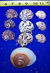 10 Assorted Hermit Crab Shells