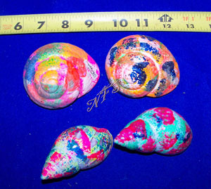 XL Multi Color Painted Hermit Crab Shells