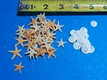Tan Starfish tiny under 1